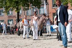 DSC_2343 (Ton van der Weerden) Tags: horses horse dutch de cheval belgian nederlands belges draft chevaux belgisch trait ijzendijke trekpaard trekpaarden