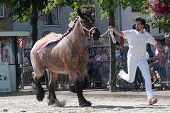 DSC_2413 (Ton van der Weerden) Tags: horses horse dutch de cheval belgian nederlands belges draft chevaux belgisch trait ijzendijke trekpaard trekpaarden sofievandefosseeugenia