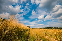North Downs Way (James Waghorn) Tags: trees light summer england sky field clouds gold countryside kent nikon solitude harvest sigma ultrawide northdowns maidstone lightroom sigma1020 d5000 kentdownsareaofoutstandingnaturalbeauty bestofblinkwinners blinksuperstars
