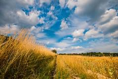 North Downs Way (James Waghorn) Tags: trees light summer england sky field clouds gold countryside kent nikon solitude harvest sigma ultrawide northdowns maidstone lightroom sigma1020 d5000 kentdownsareaofoutstandingnaturalbeauty bestofblinkwinners blinksuperstars