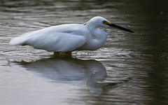IMG_1347_web (EdgarJi) Tags: bird nature animal canon pond singapore wildlife 7d chinesegarden 100400