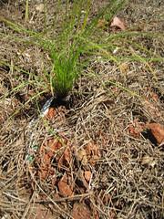 Plant a Wish: Georgia