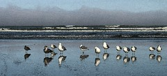 Gulls...with Watercolor Filter (byrdiegyrl) Tags: ocean vacation seagulls reflection beach water birds oregon seaside sand pacific gulls september 2013 matchpointwinner mpt313