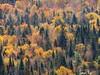 (Sarah-Vie) Tags: automne img 0030