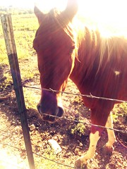 293/365 Horse Pettin' (joditbobo) Tags: horse fence benbrook day293 benbrookstables day293365 3652013 flickrandroidapp:filter=none 365the2013edition 20oct13