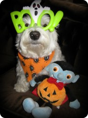 "10/12B ~ ""I like my stuffie"" (ellenc995) Tags: friends halloween riley westie westhighlandwhiteterrier neighbor stuffie naturesfinest ruby3 coth supershot akob abigfave citrit pet500 pet100 concordians platinumheartaward naturallymagnificent 100commentgroup yearofholidays challengeclub coth5 naturallywonderful ruby10 thesunshinegroup sunrays5 12monthsfordogs13 challengeclubchampion"