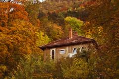 Forever autumn (anagrama2009) Tags: autumn trees house evening nikon colours mauntain brasovromania fleursetpaysages outstandingromanianphotographers