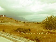 albania016 (deangeli.federica) Tags: trip colour landscape route triumph moto biker albania viaggio reportage scutari berat tirana rout elbasan gjirokastra saranda kruja durazzo valona tiger800 vision:mountain=056 vision:outdoor=0802