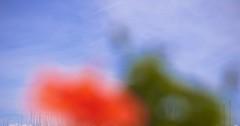 November_2_DSC4159 (Volker Meissner) Tags: italien blue red summer italy sun verde green rot meer barca italia mare sailing estate sommer liguria riviere dream himmel cielo mast grün blau fiori vela sole albero sonne rosso dei segelboot sogno malva andora traum mittelmeer ligurien malvenblüte