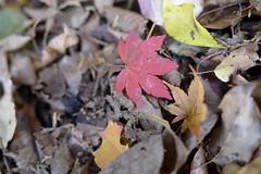 (yuji katabuchi) Tags: red orange green nature nikon micro fukuoka boken d800 vision:mountain=0614 vision:outdoor=0779 vision:plant=0658