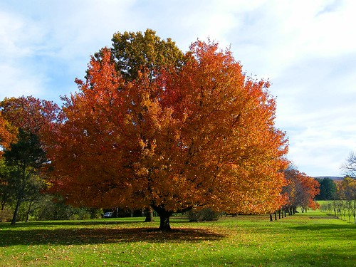 Fall Orange Tree