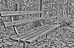 Park Bench I HDR (from negative scans) - Method Fattal - Pentax PC35AF-M Compact with 35 mm f:2.8 fixed lens using Ilford 400 ISO B&W Film (Logos: The Art of Photography) Tags: blackandwhite 35mm hdr compact bowenpark bwfilm ilford400 compact35mm pentaxpc35afm