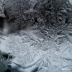 Winter Art - Art hivernal (monteregina) Tags: morning winter canada abstract macro ice window nature water glass closeup droplets eau frost hoarfrost fenster patterns hiver natur shapes textures québec designs condensation abstraction eis formations icecrystals glace givre motifs matin jackfrost vitre frostedglass gouttes abstrait iceart formes cristaux eiskristalle iceformations frostedwindow frostywindow icepatterns monteregina crystalspatterns vitresgelées fenêtresgelées