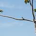 """O Dragão de São Francisco - São Francisco do Sul/SC - 21/01/2014 • <a style=""""font-size:0.8em;"""" href=""""http://www.flickr.com/photos/39546249@N07/12076234004/"""" target=""""_blank"""">View on Flickr</a>"""