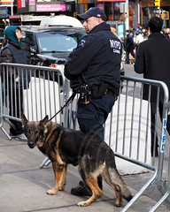 NYPD Canine Police Officer with Dog, 2014 Super Bowl XLVIII Boulevard on Broadway, Manhattan, New York City (jag9889) Tags: seattle city nyc ny newyork newjersey boulevard stadium manhattan nfl broadway police nypd canine denver meadowlands seahawks superbowl metlife broncos department lawenforcement finest afc nfc k9 2014 firstresponder xlviii jag9889 20140202