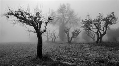 lost in the fog (Luigi Alesi) Tags: trees bw italy white black fog alberi landscape nokia scenery san italia foggy bn severino nebbia 1020 bianco nero marche paesaggio macerata lumia sanseverino mygearandme mygearandmepremium mygearandmebronze mygearandmesilver mygearandmegold mygearandmeplatinum mygearandmediamond