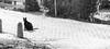 Black cat, Holysloot, Noord-Holland, Netherlands (Stewart Leiwakabessy) Tags: street black netherlands amsterdam rural cat village bricks quaint noordholland the holysloot whiteblackwhite animalcatblackblack