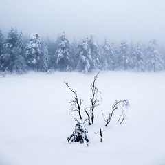 (Svein Nordrum) Tags: wood blue trees winter light white snow tree nature oslo forest square woods scenery branches north explore squareformat vegetation wintertime nordmarka bsquare explored marimyr