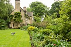 The Lodge (Sue_Hutton) Tags: dog garden spring basil rutland uppingham countrygarden clivejones may2014