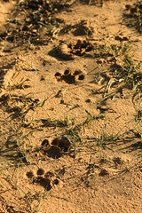 Namibia 04/14 (nele_ls) Tags: africa sunset wild nature animal animals canon eos wildlife south tracks 300mm safari 600 rhino afrika tele giraffe makro namibia sd 600d