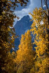 tetons_2016_19web (Jessica Haydahl Photography) Tags: grand teton national park wyoming tetons mormon row john molton barn apsens fall colors infrared photography nikon d810 d7000 pentax 645z medium formate landscape ansel adams