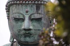 Kamakura | Great Buddha of Kotokuin (Toni Kaarttinen) Tags: japan  japonia    jap japonsko jaapan  japani japon xapn    japn jepang an tseapin giappone  japna japonija  japo  japonska japn hapon  japonya nht bn japanese kamakura formercapital temple shrine zen garden greatbuddhaofkotokuin kotokuin buddha