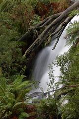 Ferntree Falls (blachswan) Tags: victoria australia ferntreefalls mountbuangorvictoria mountbuangorstatepark water cascade waterfall ferntree ferntrees timeexposure