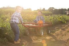 Fall Fun (IMIJRY Workshop) Tags: nj jersey fresh farm pumpkins picking boys nephews twins jackson zachary 4 cart dirt corn photography sun flare golden imijry canon 6d 70200l lglass strobist xplor adorama
