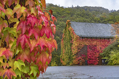 Mocking the rain (dlorenz69) Tags: autumn herbst wine wein colors farben hessen germany fall