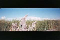 013_13 (*Snap_Shot*) Tags: anscopanoramapix ansco panorama plasticcamera plasticlens flippedlens plasticfantastic jettyisland everett everettwa seattleflickrmeetup msejettyisland1308 anscopixpanorama buyfilmnotmegapixles flimsnotdead expiredfilm fujifilm200 beliveinfilm ishootfilm 35mm panoramic fakepanorama poe portofeverett