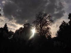 Sky (katieMai) Tags: dark sunshine sun clouds trees sillouette nature photography