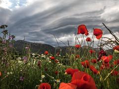 Nubes del Montsec (efe Marimon) Tags: canonpowershots120 felixmarimon catalunya lleida lanoguera vilanovademei montsec amapolas tormenta nubes