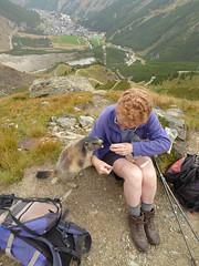Saas Fee - Walk 6 - ambush (Jackie & Dennis) Tags: marmot ambush spielbodenmarmots marmots spielboden saasfee switzerland swiss murmeltier marmotamarmota marmota marmotte