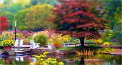Don't worry for just one moment (farmspeedracer) Tags: autumn fall nature sunday germany october tree pond silence misty red park garden