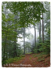 Autumn 02 (M.J.Woerner) Tags: forest autumn wood foliage leaves woods october timber fog november mist walk haze wald stroll laub herbstlaub nebel dunst autumnforest fallfoliage fallleaves herbstwald autumnfoliage forst spaziergang rainyday fallwoods rainydays