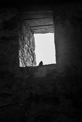 DSC_0282 (Kaigara Online) Tags: enisala cetate capul dolosman bw clouds water reflections trees fields romania tulcea jurilovca birds cows sheep cross cinema gods ruins arganum citadel medieval