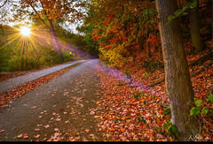 Amazing light (kelvinsei) Tags: parks outdoor canada ontario evening wood trees red leafs maple light autumn