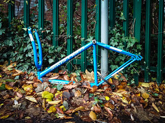 All that remained (real ramona) Tags: bike blue frame abandoned locked autumn leaves golden bristol england unitedkingdom cycle