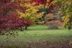 IMGP9056 (Roger Dickens) Tags: westonbirt trees acers autumn autumncolours gloucestershire