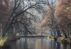 November colors can be great! (:Linda:) Tags: park canal tree baretree reflection germany thuringia town hildburghausen