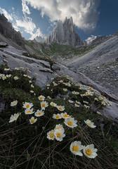 Knives (Bruno Pisani) Tags: bruno pisani landscape flower daylight wide dolomites