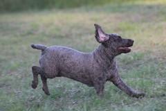 My dog running (natalia.bird_nerd) Tags: mydog running