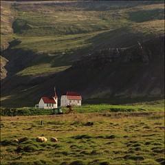 Countryside... (mau_tweety) Tags: breiafjrur isl iceland vestfirir islanda fields campi pecore sheep chiesa church