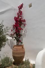 DSC01604_s (AndiP66) Tags: agiosstefanos egeo griechenland gr rocabellaarthotel mykonos greece kykladen cyclades aussicht view juni 2015 hellas ellada sony sonyalpha 77markii 77ii 77m2 a77ii alpha ilca77m2 slta77ii 18270mm tamron andreaspeters