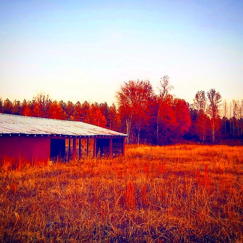 'Autumn, She Arrives'  --  ® Frankie Shane Humphrey   #naturephotography #nature #natureporn #instagood #420 #420💚  #outdoorphotography #earthtones #autumn #instaprize #picoftheday #farm #field #virgin #🔱 #TheCatsMeow #Groov