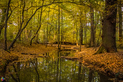 Golden autumn 8 (JTPhotography) Tags: autumn golden leaves trees nature water reflections sunny wildlife rivers lake panasoniclumixg6 olympus918mm