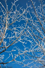 Hoarfrosted Branches - Quinte West, Ontario (Kim Toews Photography) Tags: hoarfrost outdoor abstract branches winter blue white frost sparkling texture tangle trees seasons ontario nature