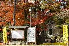 DSC02816 (MrSUIZOU) Tags: 京都 紅葉 北野天満宮 平野神社 十月桜