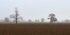 Chater Valley Trees (AndyorDij) Tags: riverchatervalley lyndon lyndonhill lyndonhall lyndonestate england rutland uk unitedkingdom 2016 andrewdejardin autumn trees tree misty mist fog foggy fields