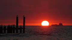 red (antje p.) Tags: red sun sea zeeland ship seagull